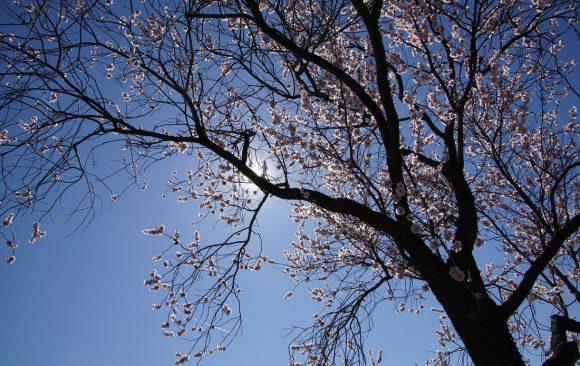 Le printemps est arrivé pour chasser l'hiver: renouveau, légèreté et joie