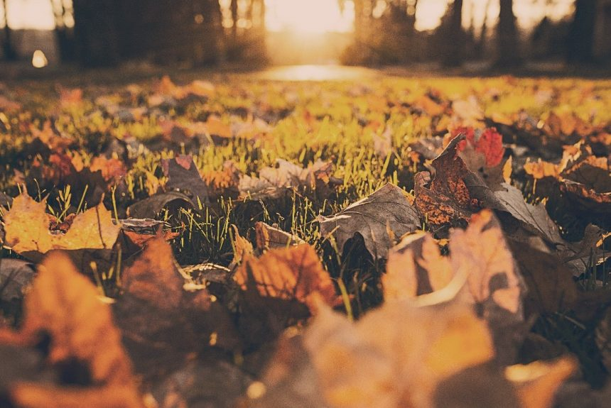Se déplacer gracieusement à travers l'automne avec l'Ayurveda
