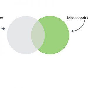 Optimiser la fonction mitochondriale avec la kinésiologie