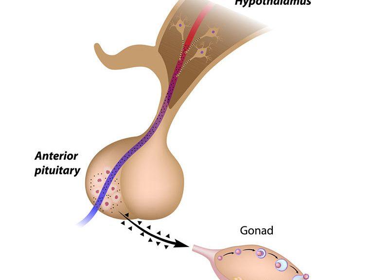 Optimiser la santé reproductive des hommes avec la kinésiologie
