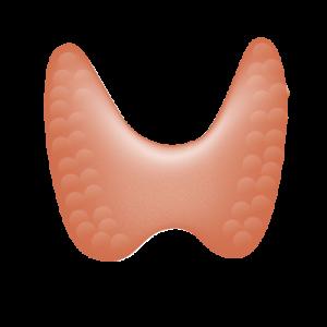 Votre thyroïde a-t-elle besoin d'une kinésiologie systématique? –