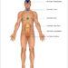 Équilibrez vos chakras pour un bien-être amélioré – L'Académie de kinésiologie systématique